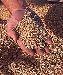 Качество зерна
